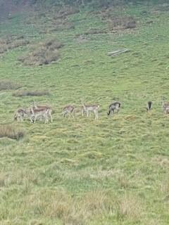 20 deer